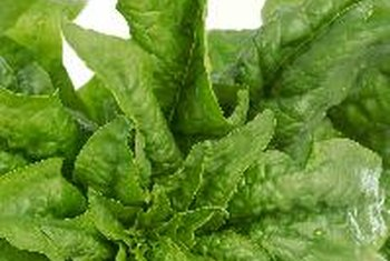 Certain vegetables, including spinach, are rich in potassium.