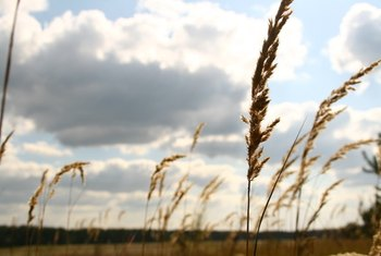 Wheat and grain varieties in the wheat family all contain gluten proteins.