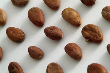 Raw, unroasted cacao beans contain potent antioxidants.