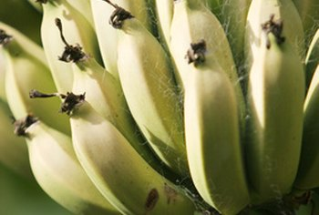 Eat bananas as a source of dietary fiber.