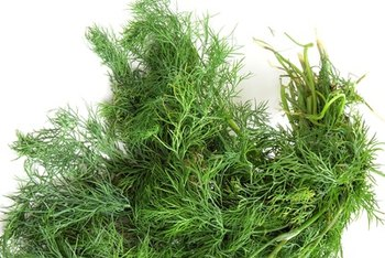 Dill is a common pickling spice.