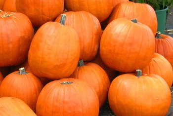 Although nutritionally powerful, pumpkins are best known as Halloween decorations.