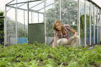 Greenhouses are most effective in sunny locations.
