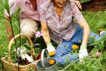 Growing ornamental plants close together helps control weeds.