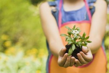 Choose easy-growing plants when planning gardening activities for children.
