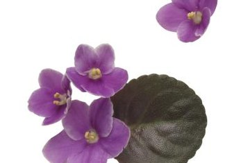 Group miniature African violets in several colors to create a small scale display.