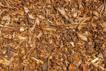 Bark chip mulch discourages weeds and breaks down slowly.