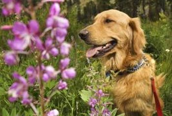 The flowers, berries, leaves, stems and roots of many plants are toxic to dogs.