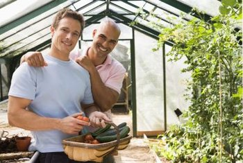 Greenhouses help produce abundant and tasty cucumbers.