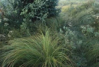 Fountain grasses add movement and color to the yard.