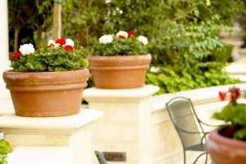 Container gardening can satisfy your yen for plants even where space is limited.