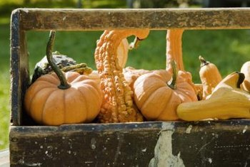 Hand-pollinate gourds to ensure a successful crop.