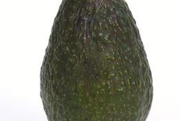 A classic Haas avocado, an early-maturing variety