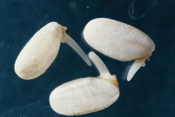 White Fungus on Germinating Seeds | Home Guides | SF Gate