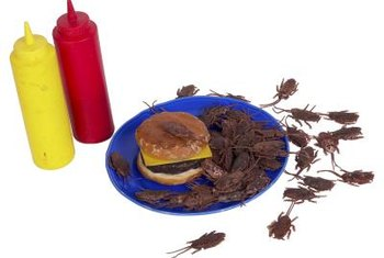 Bits of cockroach cuticle and droppings are potentially problematic allergens.