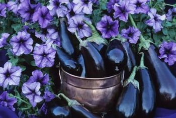 All petunias, including Double Wave, do well in flower pots.
