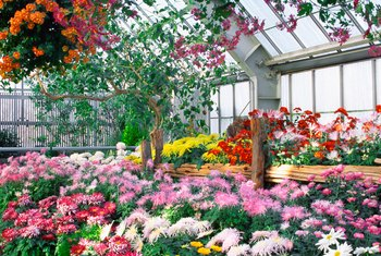 Greenhouses allow growth and blooming all year.