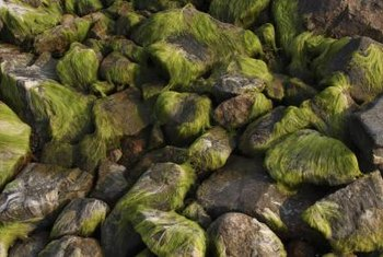 Moss grows on various surfaces, including rocks.