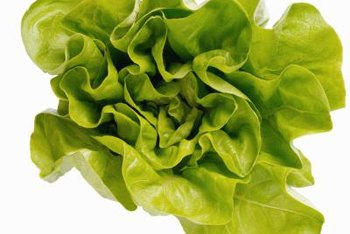 Leafy greens grow quickly and efficiently in a hydroponic environment.