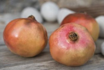 A healthy pomegranate tree can set fruits in its second year.