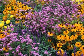 How to arrange a perennial flower bed home guides sf gate colors on opposite sides of the color wheel create bright contrast mightylinksfo