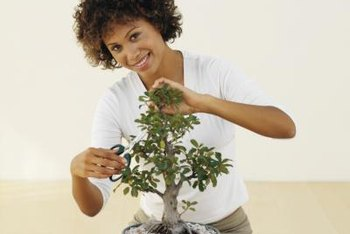 Prune branches and leaves regularly to maintain the form of your bonsai.