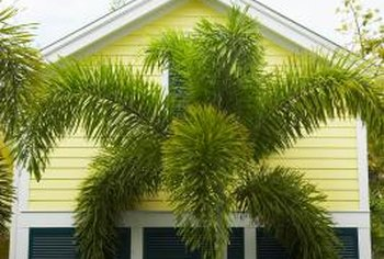 Hunter green shutters create a striking contrast with pale yellow siding.