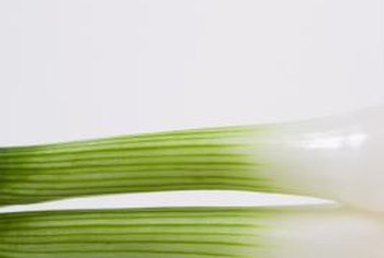 White Ebenezer are best suited for use as green onions.