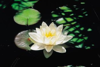A plastic pond needs to be at least 18 inches deep to support a water lily.