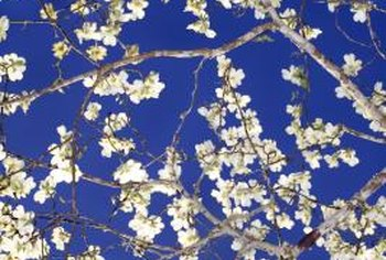 Flowering dogwood doesn't require full sun to produce blossoms.