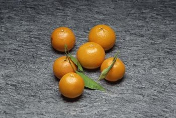 Clementine trees range in size from small to medium.