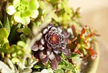 A variety of succulent plants creates an attractive, low-maintenance dish garden.