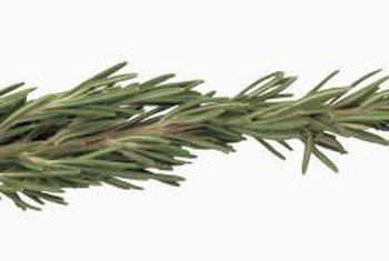 Use the prunings from shaping rosemary topiaries in cooking.