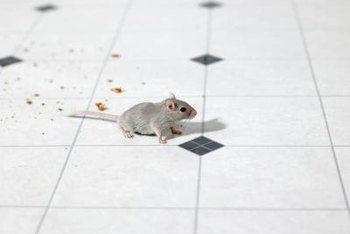 Homemade remedies can repel mice without being toxic to children or pets.