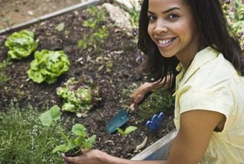 Amending the soil in vegetable beds helps you grow healthier, more disease-resistant plants.