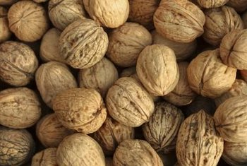 Human consumption of English walnuts dates back thousands of years.