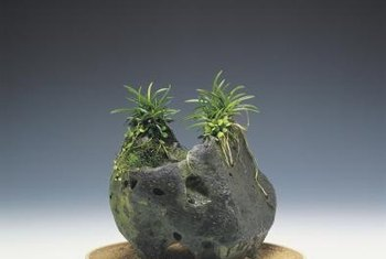Niches in stones or logs work well for mounting air plants.