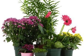 Not all houseplants have the same care needs.