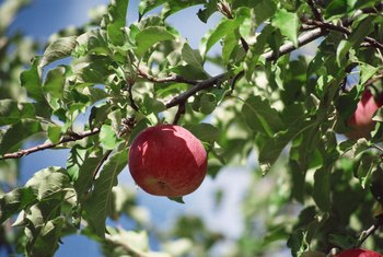 Planting fruit trees at the right time helps ensure healthy trees.