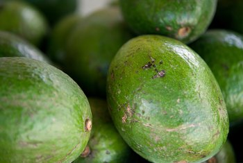 Cross-pollination with a second tree will produce the biggest avocado crop.