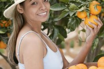 Dwarf orange trees can grow to 16 feet when planted in the ground.
