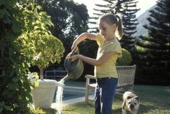 Water can help dilute dog urine near plants.