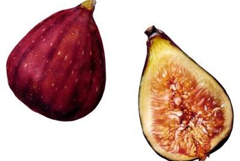 Fig trees are attractive and productive with regular pruning.