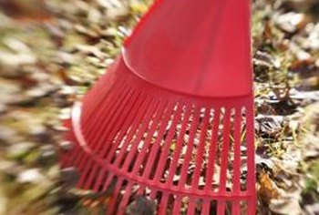 Landscape wisely under deciduous trees to make raking leaves less of a chore.