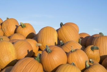 Grow your own pumpkins from seeds.