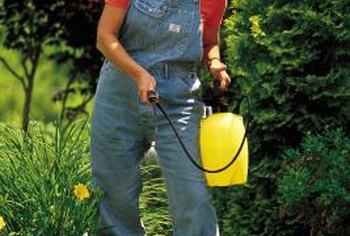 A lightweight garden sprayer works well for mixing and spraying insecticidal soap.