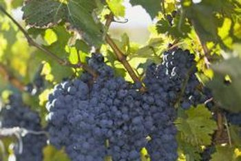 Grapevines perform best when the soil has the right nutrient levels.