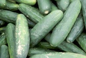 Growing cucumbers on a trellis heavily boosts crop yield.