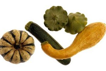 Squash grows on sprawling plants that require considerable garden space.