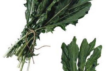 For culinary usage, cook young tender dandelion leaves in spring.